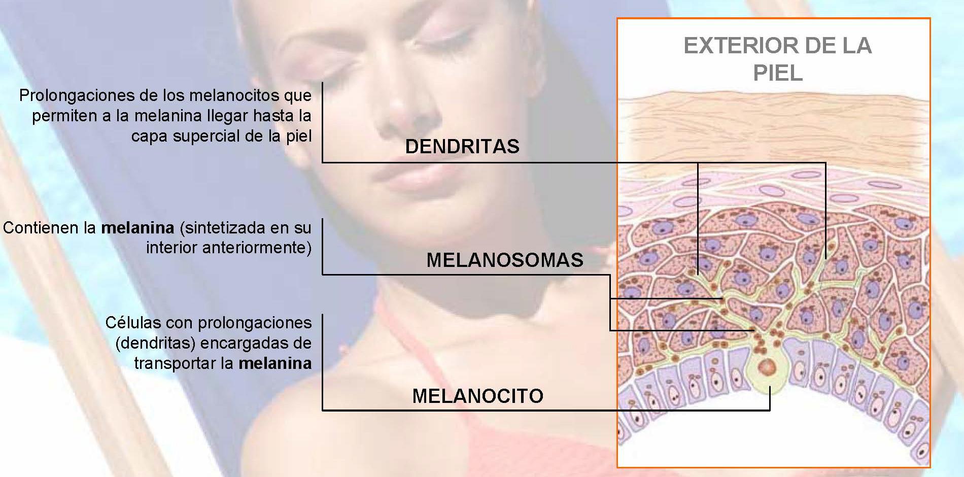 De la crema para el blanqueamiento de la piel de la zona íntima