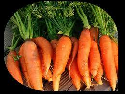 zanahoriasysol